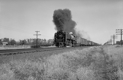 2013.010.UP.AS.0835B--bill kuba 6x9 neg--UP--steam locomotive 4-8-4 835 on freight train action--Central City NE--1958 1011