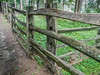 Mouldy splitrail fence