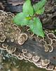 Very damp woods - lots of fungus