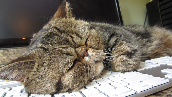 Willie Falls Asleep on My Keyboard = Not Helpful