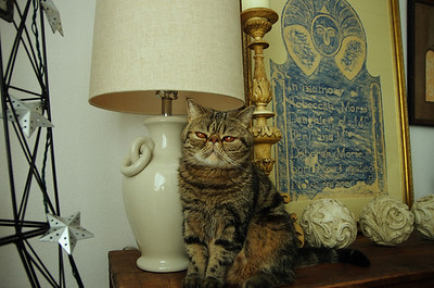Willie Guarding the Lamp