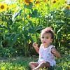Leighton Sunflowers