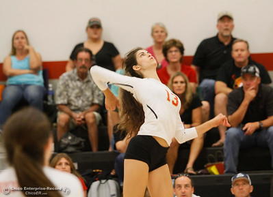 Chico High power house Kylie Johnson winds up for a strong spike during a volleyball game against Willow High School September 20, 2016 Chico, Calif. (Emily Bertolino -- Enterprise-Record)