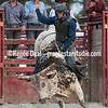 DSC_5560- Willowdale Pro Rodeo 10 14 17- Bull Riding- Mike Adams- 1st pl 88pts