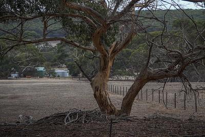 Tree with V