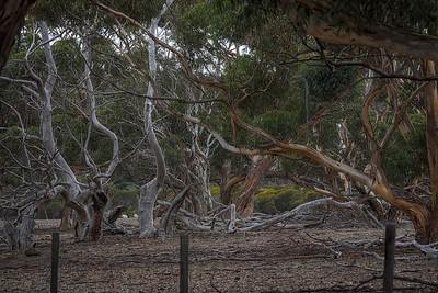 Tree Mix