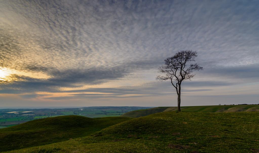 Roundway Tree