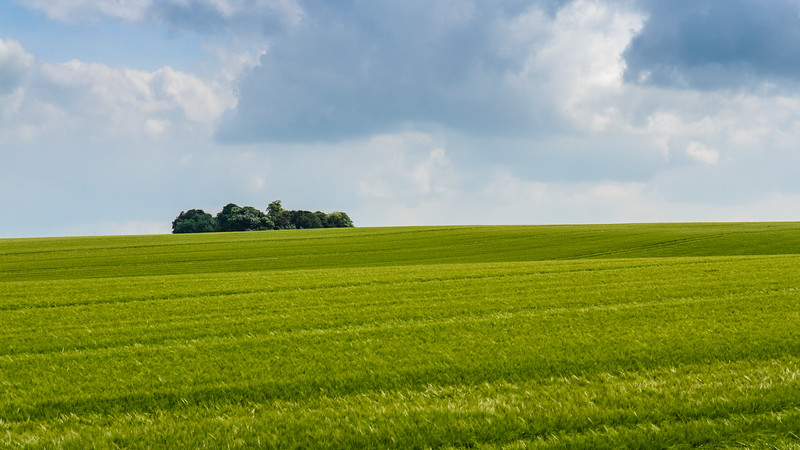 Clump of trees in arable field