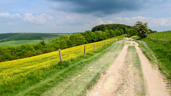 Ridgeway track on Cranborne Chase hills
