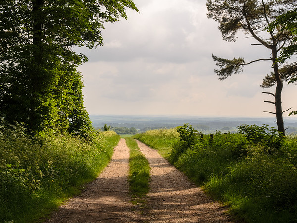 Farm track on Cranborne Chase, Wiltshire