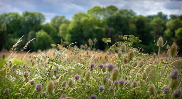 Barton Meadows Nature Reserve
