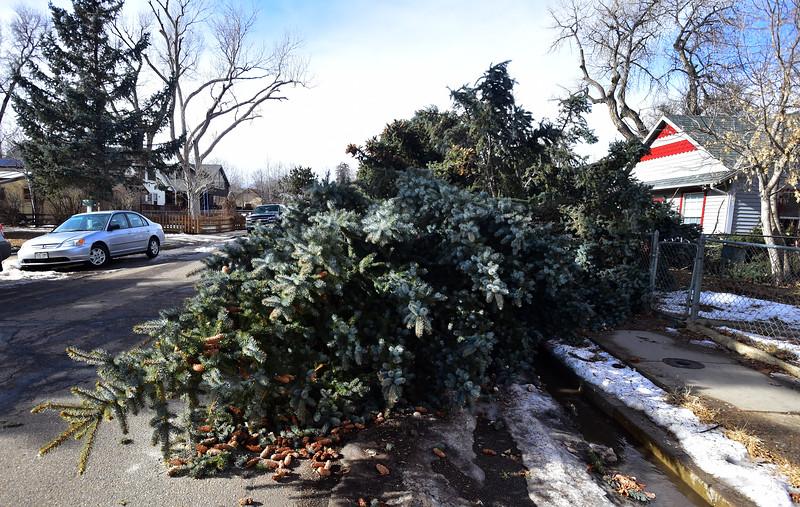 TREE DOWN WIND IN LAFAYETTE