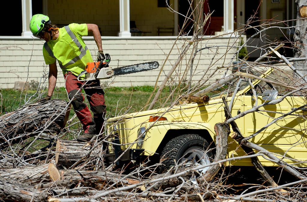 . Forestry Tech Charles Erickson works to cut a downed tree into pieces on the 400 Block of Highland Avenue n Boulder, Colorado on April 11, 2018. The tree crushed a Volkswagen convertable parked near it. (Photo by Matthew Jonas/Staff Photographer)