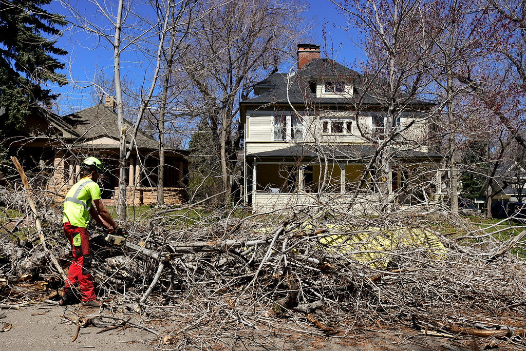 . Forestry Tech Charles Erickson cuts a downed tree into pieces on the 400 Block of Highland Avenue n Boulder, Colorado on April 11, 2018. The tree crushed a Volkswagen convertable parked near it. (Photo by Matthew Jonas/Staff Photographer)