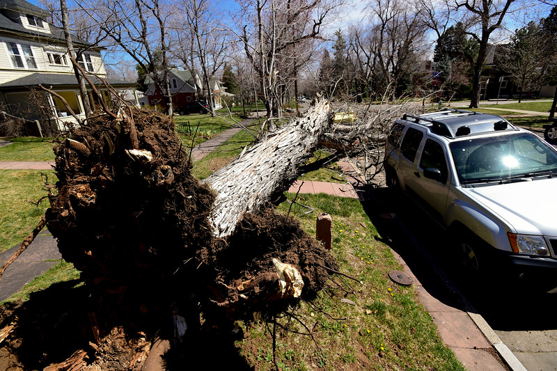 Tree Falls on Car Boulder