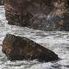 sea otter and sea spray