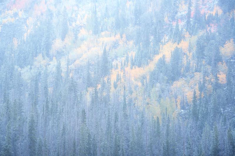 """Winter Veil"""