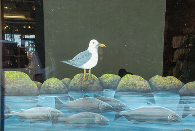 Sea Gull and a School of Fish