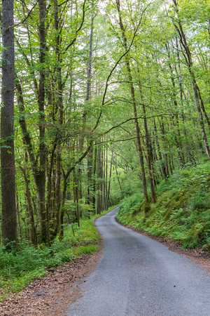 Wooded Lanes