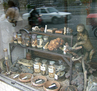 Apothecary's Monkey, Kyoto 2007 32 x 34cm