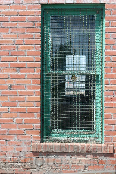 Red Brick and mesh window, Greeley, Colorado