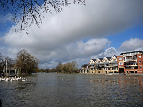 View of riverside property with swans
