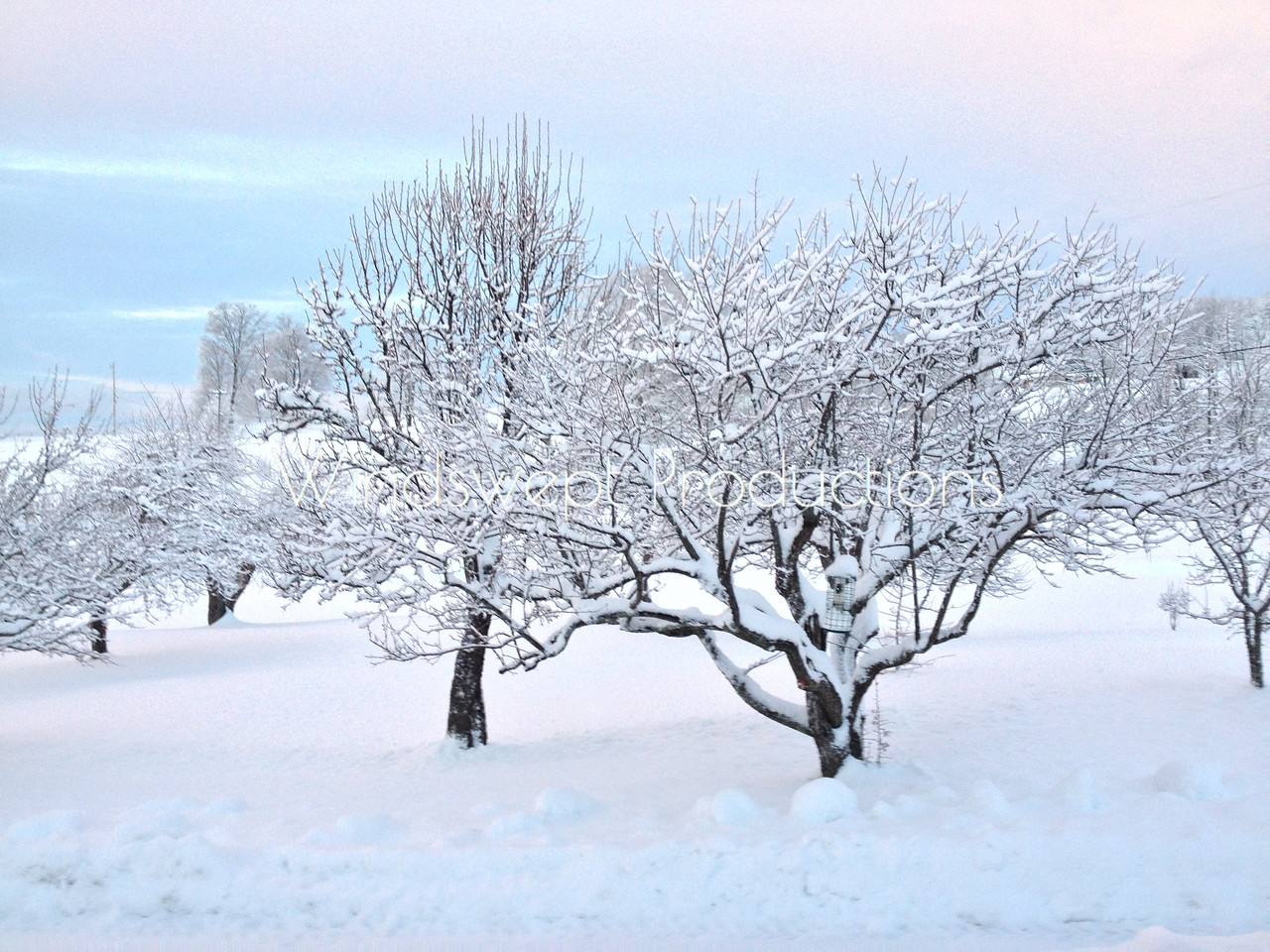 Winter Orchard in White, Grey, and Blue