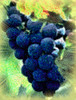 blue grapes close swirl
