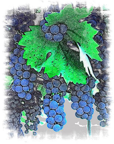 grren leaf blue grapes pencil effect