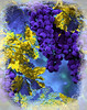 gold leaf purple grapes