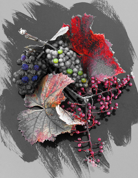 color b/w effect stilllife grapes