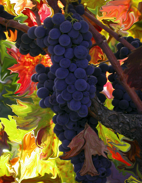 fall grapes liquify