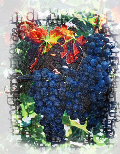 red leaf grapes embossed