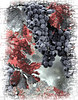 red leaf grapes desaturate
