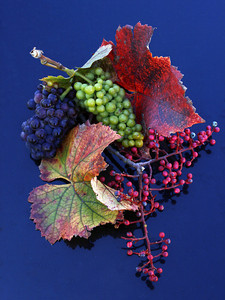stilllife grapes