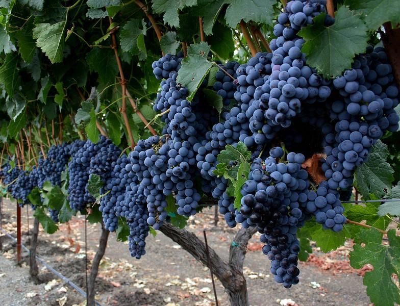 grapes 7