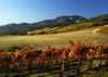 fall vineyard hillsides 30