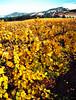 fall vineyard sonoma valley