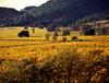 fal vineyards in valley