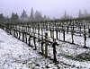 snow vineyard