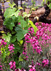 young vines and purple flowers