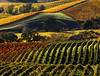 multi colored fall vineyards