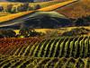 multi colored fall vineyards