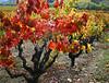 fall vines 25
