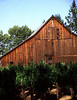 barn and summer vines