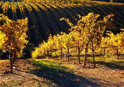 fall vineyard 21