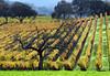 old oak fall vineyard
