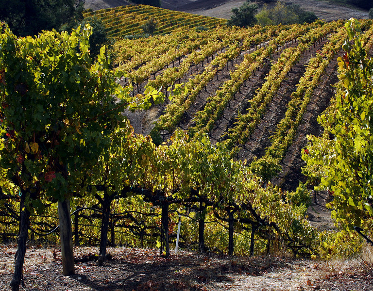 fall vineyard hillside 3