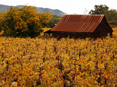 barn and fall vineyard dry creek