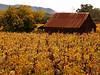 barn and fall vineyard dry creek